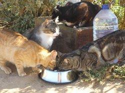 Dankbare Katzen