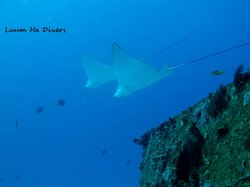 Luum ha Divers