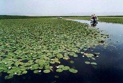 Lotus Lake of Korla
