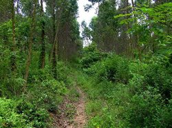 Guizhou Forest Park