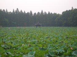 Jiangling Bonsai Garden