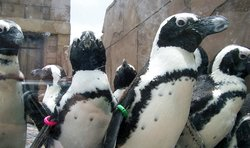 Pop in on some African Penguins at our Pavilion.