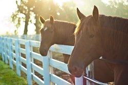 Taman Hiburan Kentucky Horse