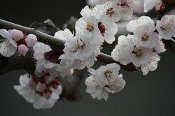 Cherry Chalet