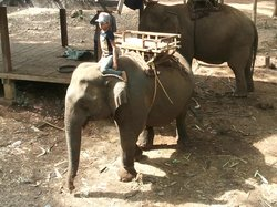 Ride On An Elephant