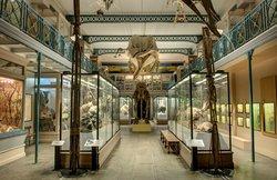 Musee d'Histoire Naturelle de Lille