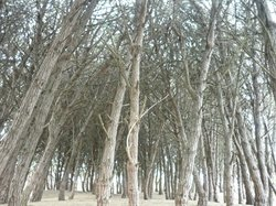 Bosque Energético
