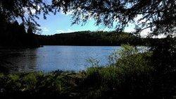 Hills Creek State Park