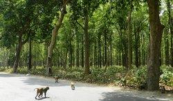 Kushmi Forest