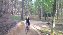 Swinley Forest Bike Trails