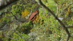 Un coche en un barranco cerca de la Frecha da Mizarela