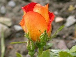 Museo Giardino della Rosa Antica