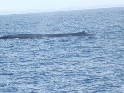A L Mirissa Blue Whales