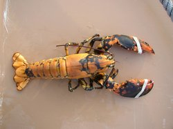 Four Mile Lobster