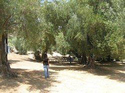 Ojai Olive Oil Ranch