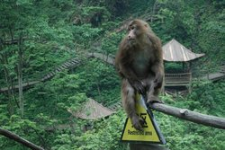 Mt. Emei Natural Ecology Monkey Reserve