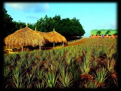 The Aloe Vera Plantation, Home of Curaloe