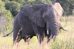 Ama-Zing Kruger Park Safaris - Day Tours