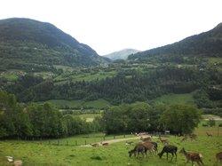 Alpen Wildpark