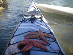 Maine Island Kayak Company