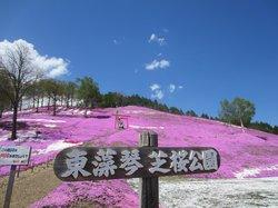 Higashimokoto Shibazakura Park