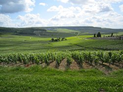 C La Vigne- Authentic Champagne Tour