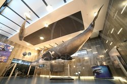 Madeira Whale Museum