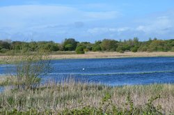 Marton Mere Local Nature Reserve