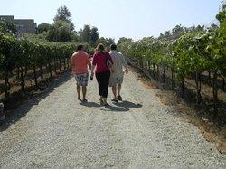 Orange County Wine Tours