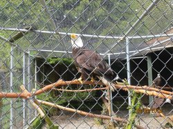 Sardis Raptor Center