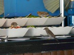 dinner - for the birds