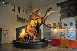 """Museo di Scienze Naturali """"E. Caffi"""""""