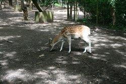 Parque Biologico de Gaia