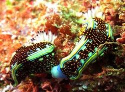 PV Sea Dive