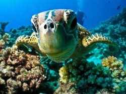 Keswick Underwater Adventures
