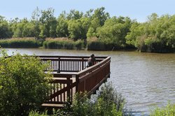 Port of Conneaut Bird Observation Platform Area