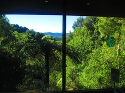 The view from Canopy Cafe interior