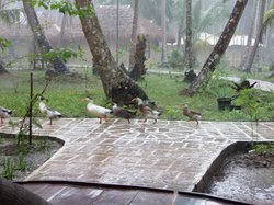 The ducks in the rain!