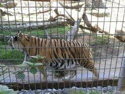 Parque Zoologico Municipal Quinzinho De Barros