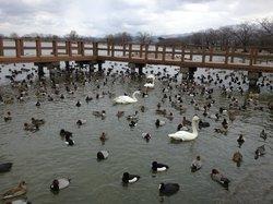 Hyokosuikin Park