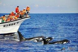 鲸世界赏鲸-赏鲸生态之旅