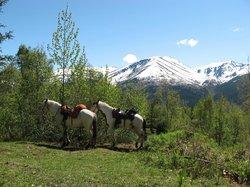 The horses take a break