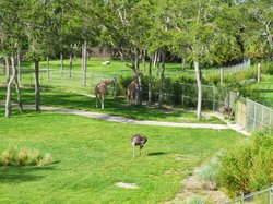 The enclosure to the left of our room had the giraffes.