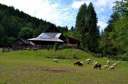 Leaping Lamb Farm