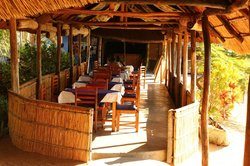 Gecko Lounge