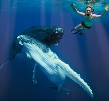 Whale Swim, Fish & Dive Tours