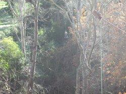 ziplining in Caledon