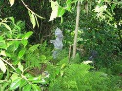 Wild Subtropical Garden