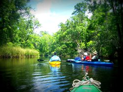 Amelia Island Kayak Excursions