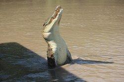 Jumping Crocodile & Wildlife Tours